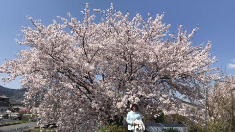 桜も葉桜になり、春爛漫の頃となりました。